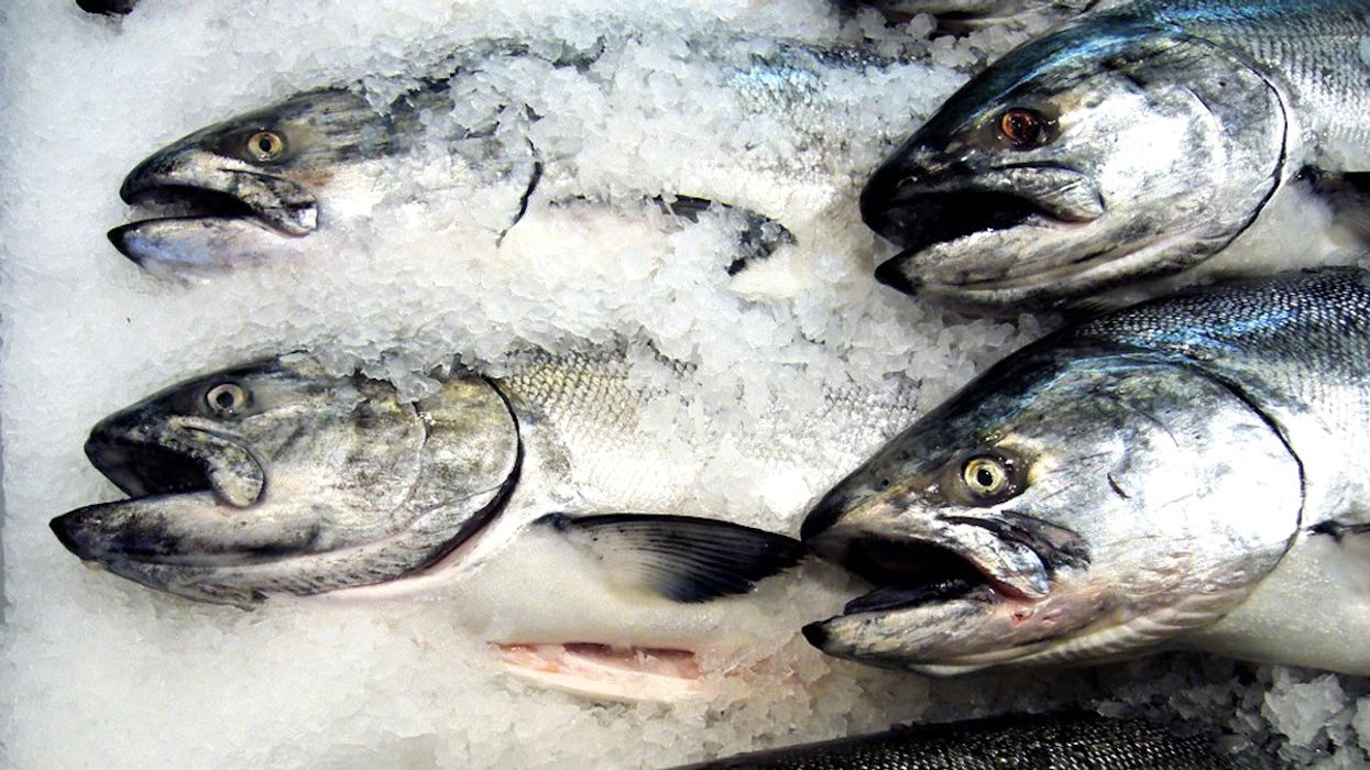 'Major Victory': Federal Court Rejects FDA Approval of 'Frankenfish'
