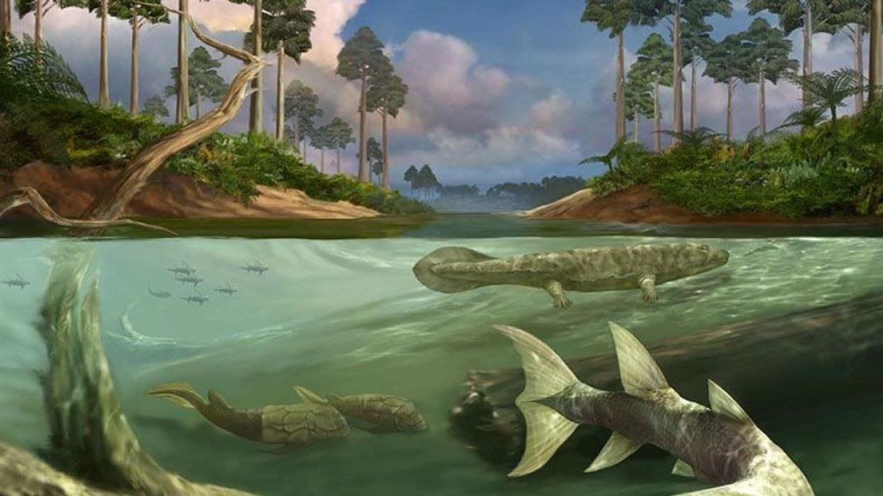 Scientists discover why fish evolved limbs and left water