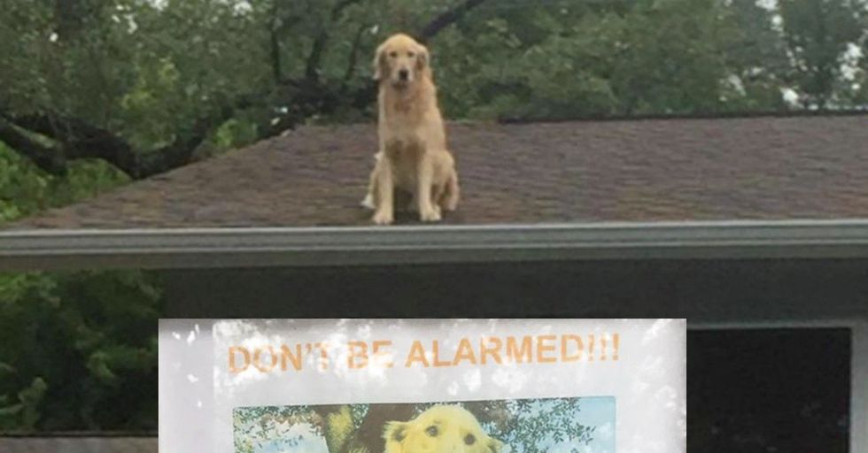 Family Has to Resort to Hilarious Sign for their Roof Dog