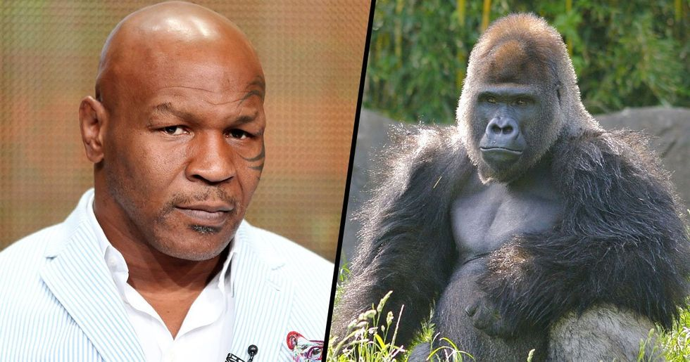 Mike Tyson Offered Zookeeper $10,000 to Let Him Fight Silverback Gorilla