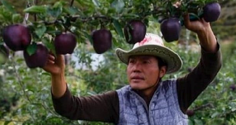 Farmers Are Refusing to Grow These Rare, Expensive Black Apples for a Specific Reason