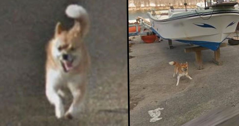 Dog Ruins Every Frame of Google Street View by Chasing the Camera