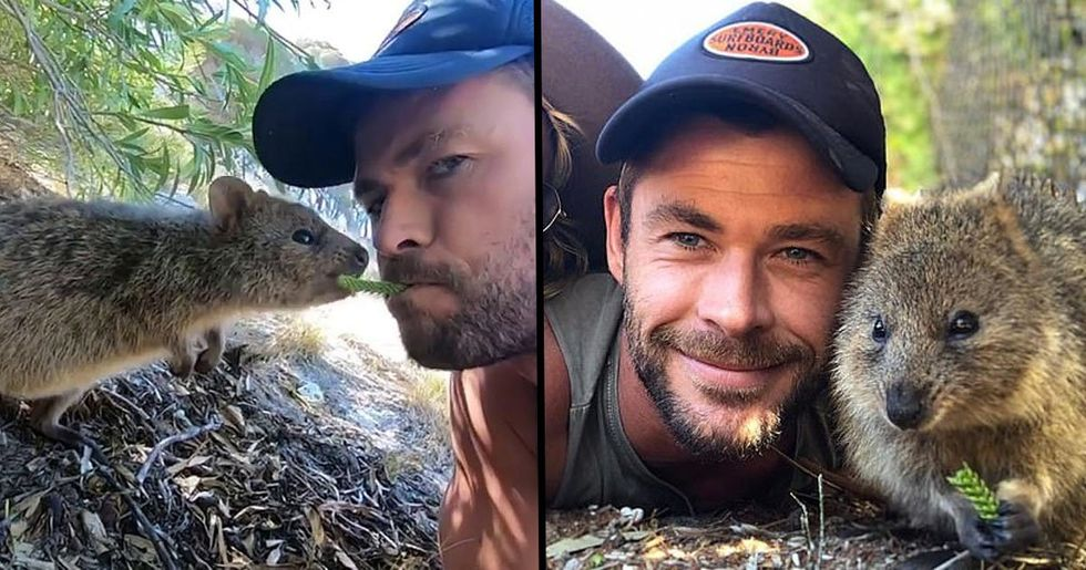 Chris Hemsworth Feeds Quokka From His Mouth