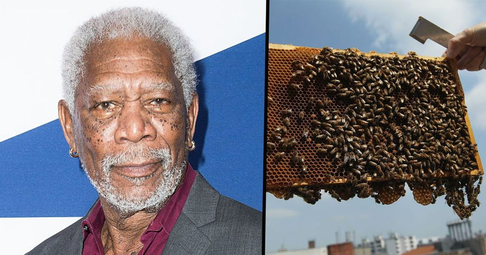 Morgan Freeman Converts 124-Acre Ranch Into Sanctuary to Save the Bees