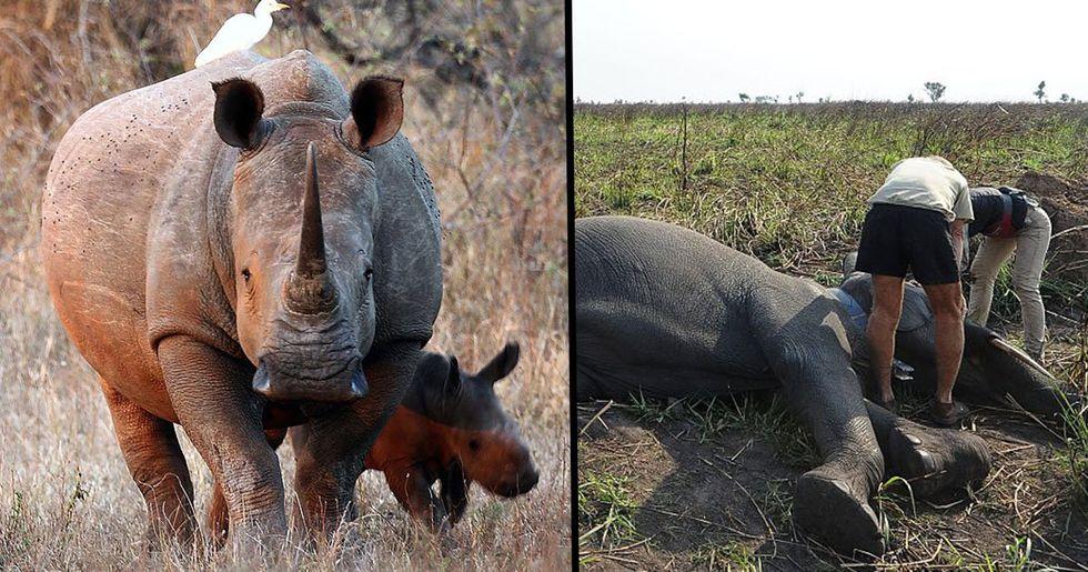 Kenya Announces Poachers Will Face Death Penalty