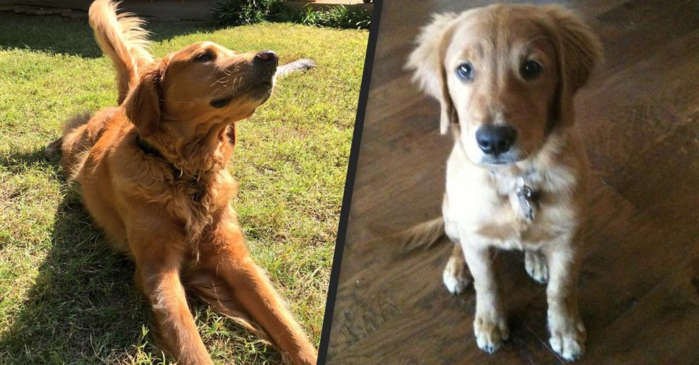 The Heartwarming Story of Hank the Dog Will Be the Best Thing You'll Read All Week