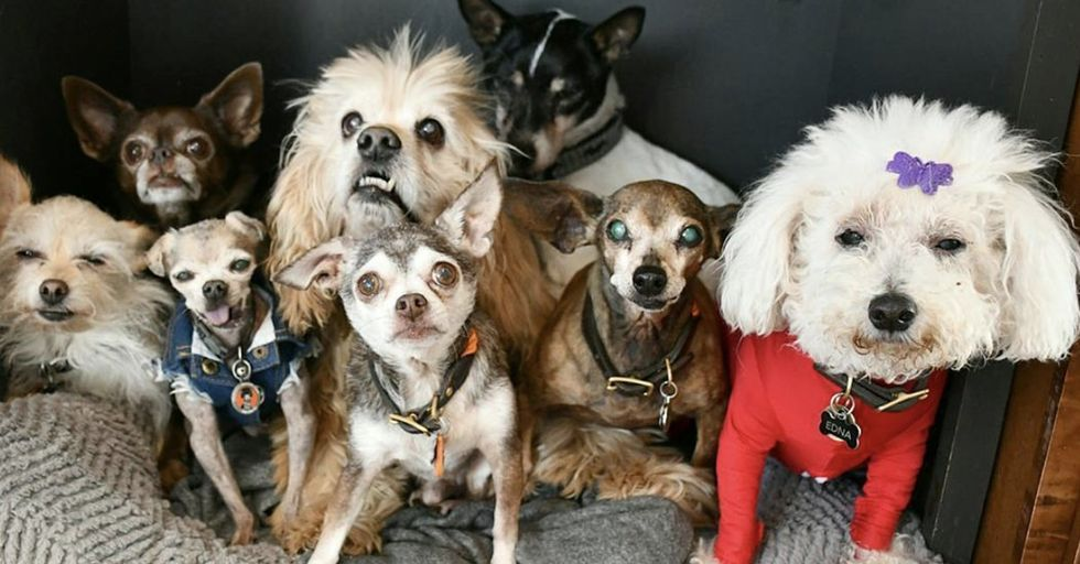 Colorado Man Adopts 10 'Unwanted' Senior Dogs From Shelter