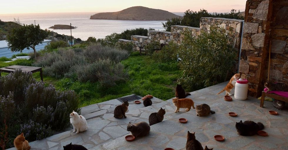 Get Paid to Live on the Greek Island of Syros and Care for 55 Cats