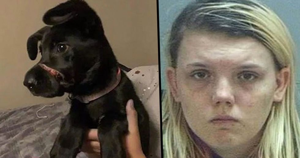 Evil Teen Taped Her Four-Month-Old Puppy's Mouth Shut 'for Two Weeks' to Stop Her Barking
