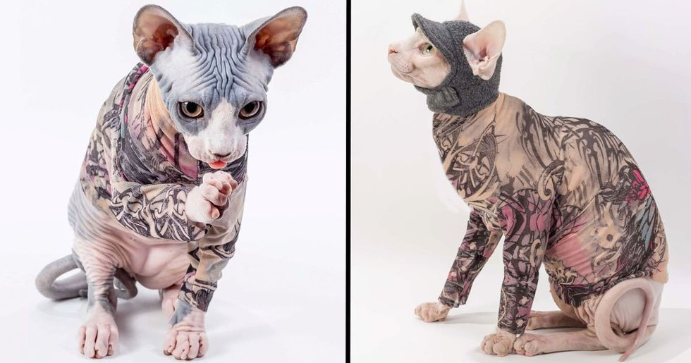 Tattoo Sleeves For Cats Are Now a Thing