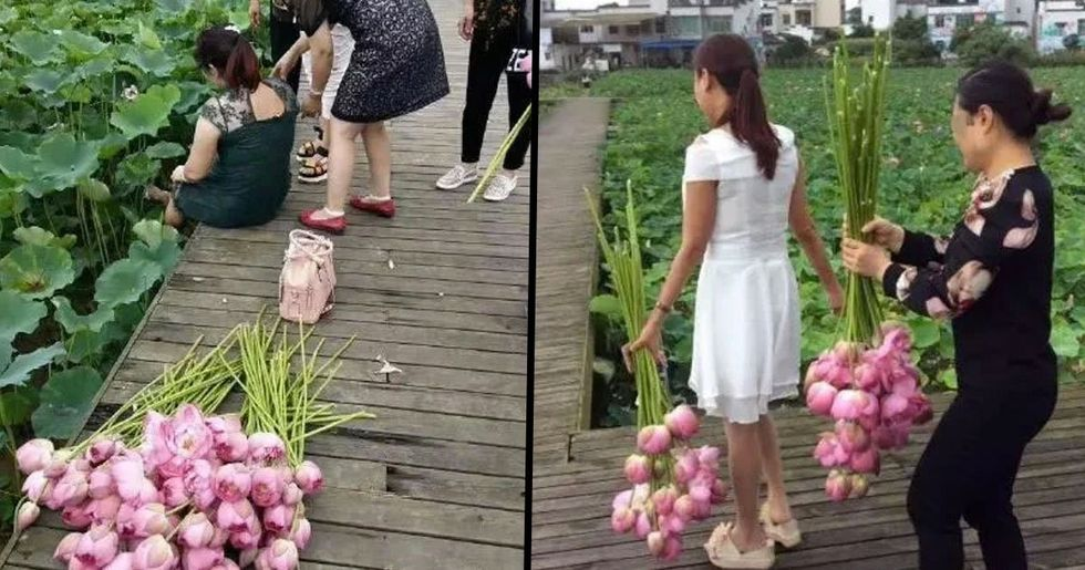 Tourists Break Into Eco-Park and Steal All of Its Lotus Flowers