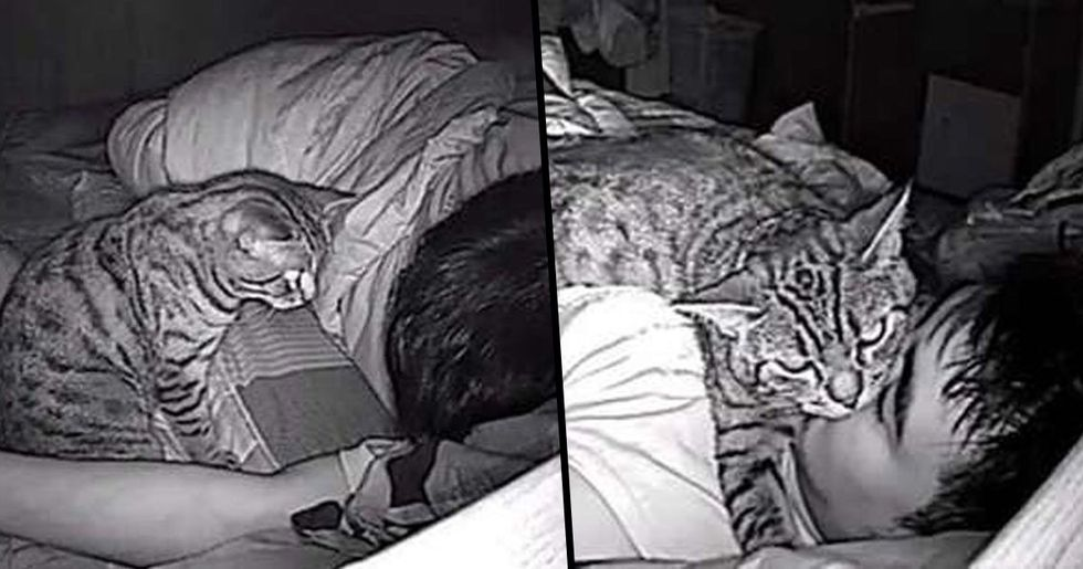 Guy Installed Camera to Keep Eye on Cat Only to Find It Suffocating Him at Night