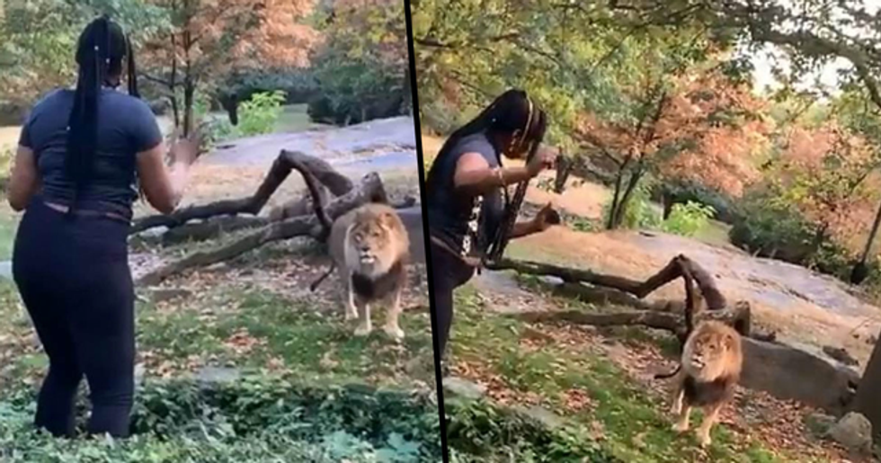 Woman Climbs Over a Safety Barrier at New York Zoo to Taunt Lion