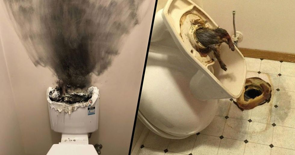 Plumber Shares the Craziest Things He's Seen on the Job
