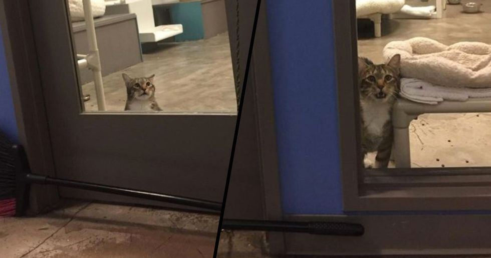 Shelter Cat Put in Solitary Confinement for Repeatedly Letting Other Cats Out