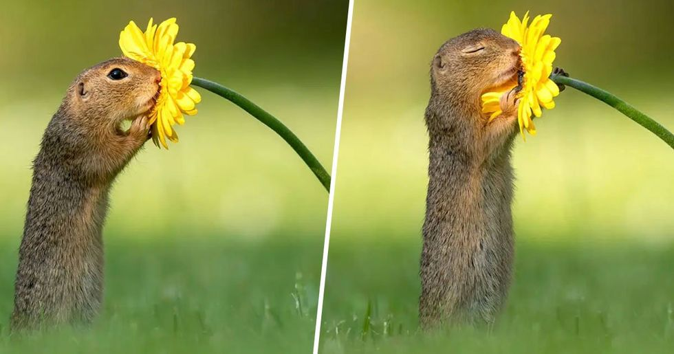 A Photographer Captured The Exact Moment a Squirrel Stopped to Smell a Daisy