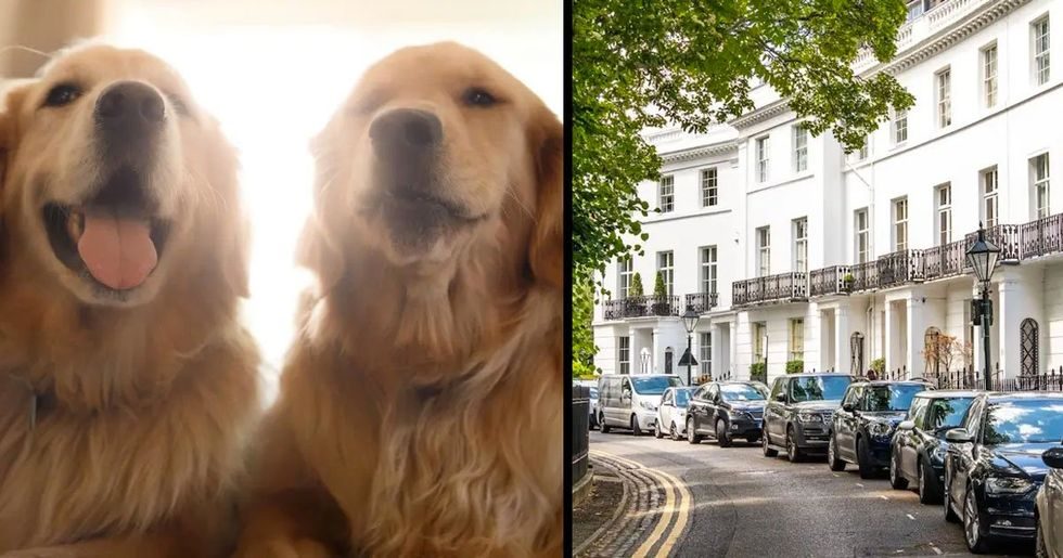 You Can Get Paid $41,000 a Year to Look After 2 Golden Retrievers in Luxury London Townhouse