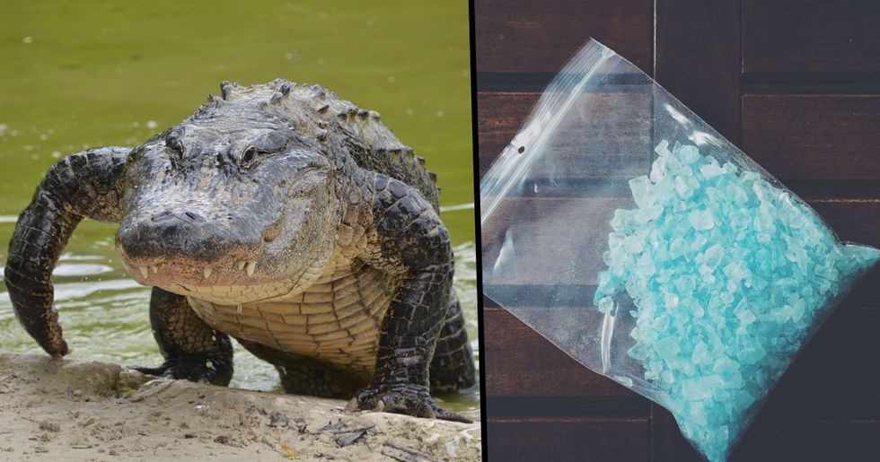 """Police Warn Against Flushing Drugs Down the Toilet and Creating Alabama """"Meth Gators"""""""