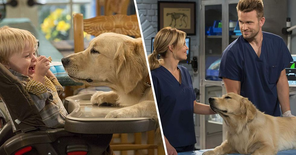 'Fuller House' Dog Cosmo Has Passed Away