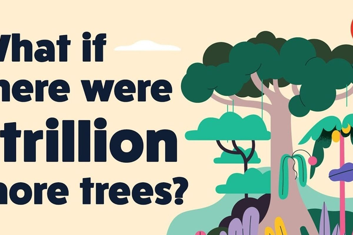 Captivating new TED video shows how planting a trillion trees would help reverse climate change