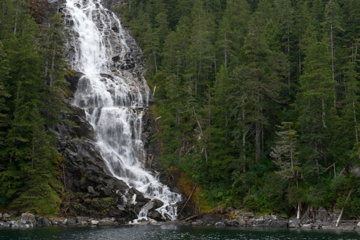 Trump admin removes protections from Tongass National Forest, opening it to clearcutting