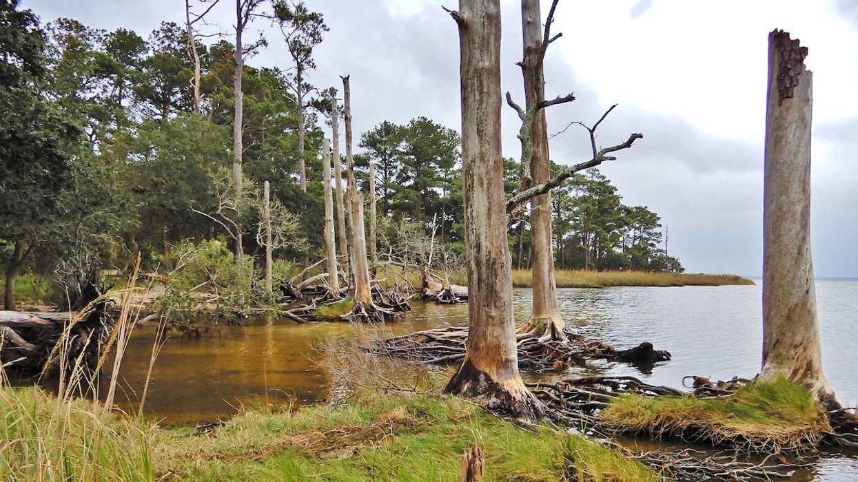 'Ghost Forests' Are an Eerie Sign of Sea-Level Rise