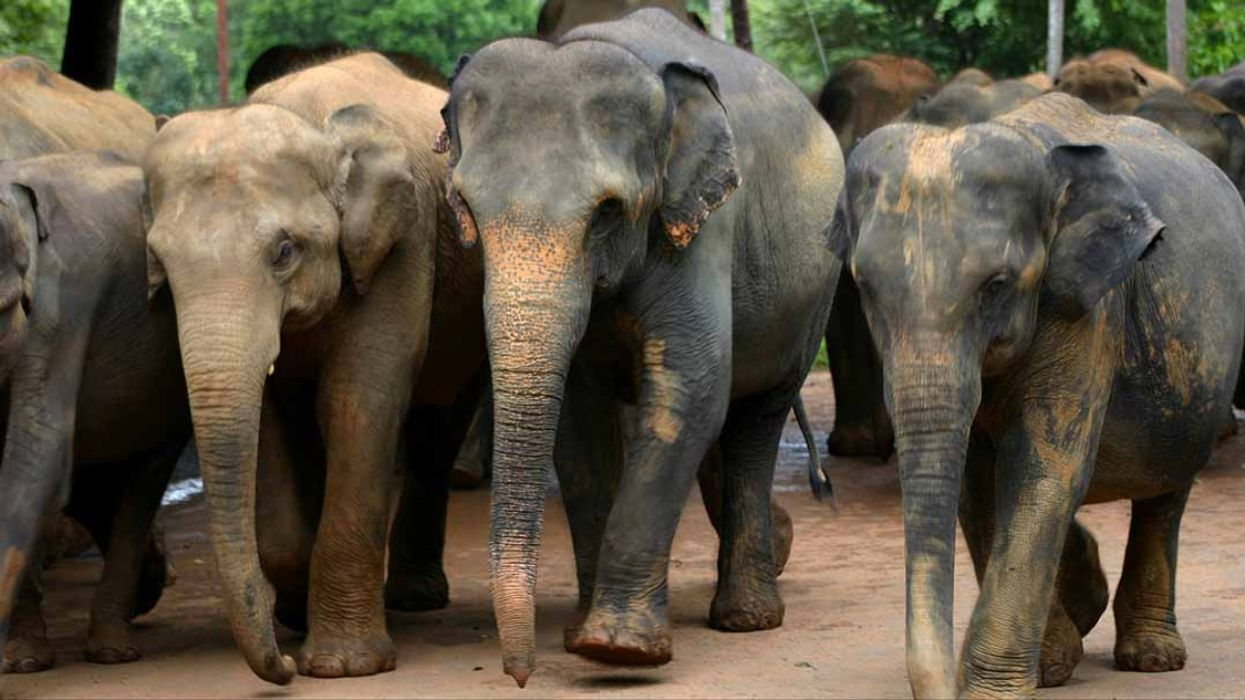 Why We Need More Protection for Migratory Animals
