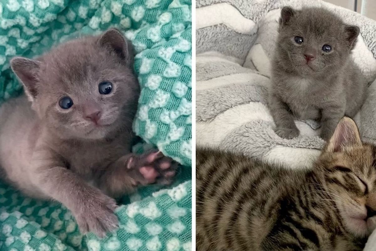 Woman Came to Shelter for 3 Kittens But Couldn't Leave Tiny Orphan Behind
