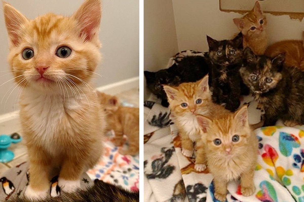 7 Kittens Find Kind People to Help Them Thrive After Being Found Abandoned Outside