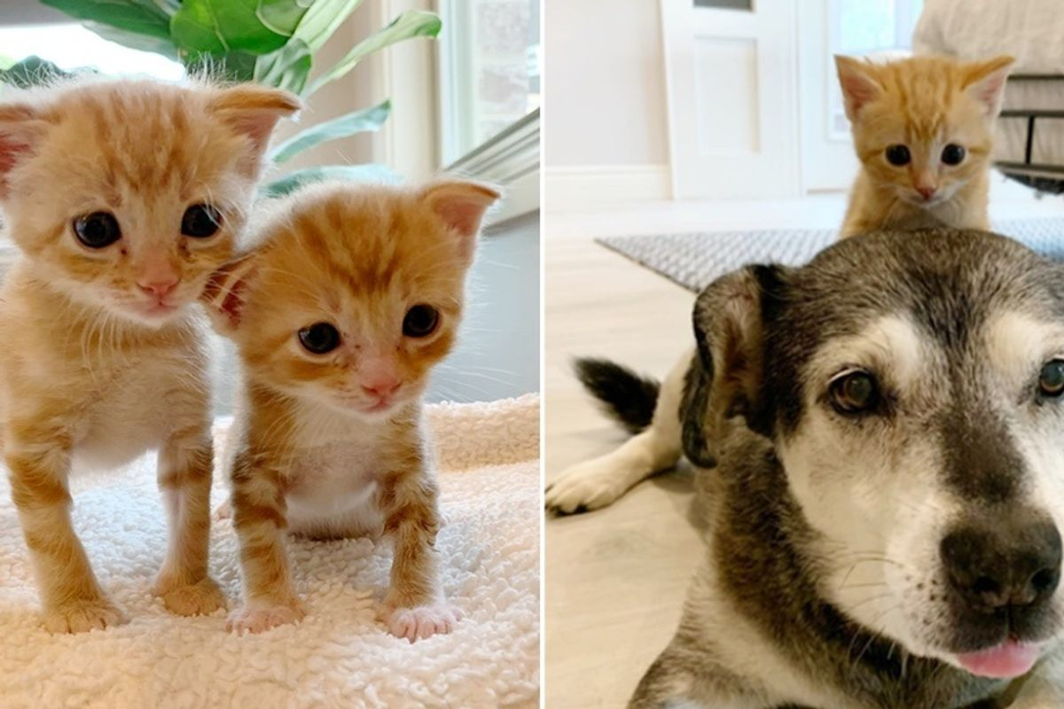 Kittens Found Under House, Bounced Back and Blossomed Through Help from Big Family