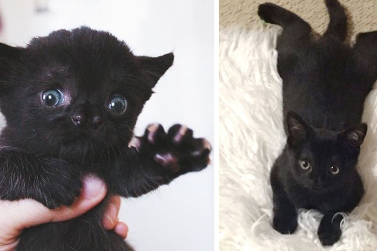 Kitten Determined to Grow Strong After Being Found in Backyard, Now Reaches New Chapter in Life