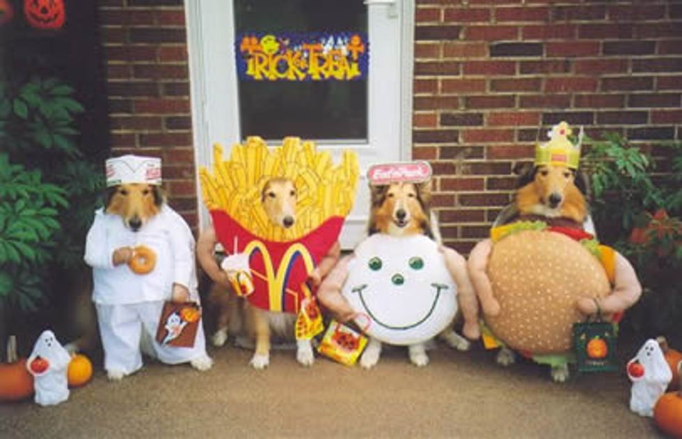 Halloween Has Gone to the Dogs!