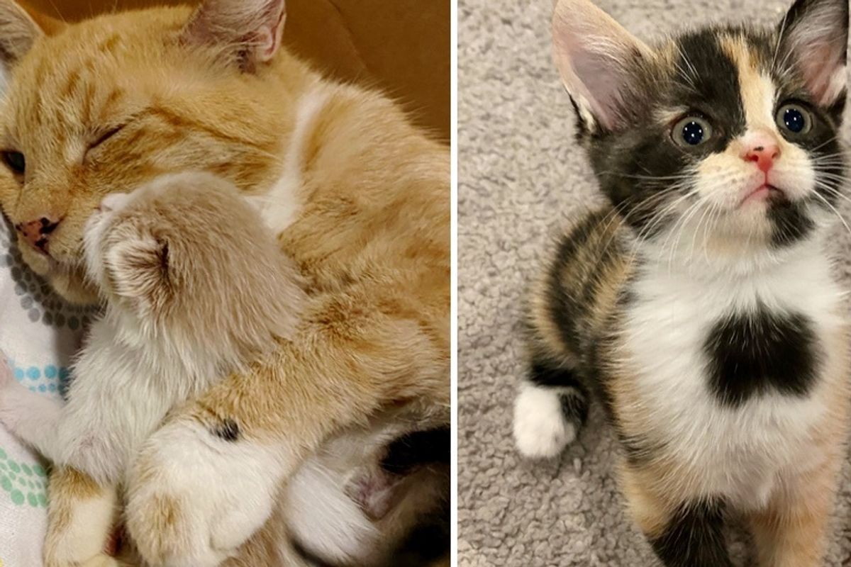 Cat and Her Beloved Kittens Thrive Through Help from Foster, Now Hope for Dream Home Together