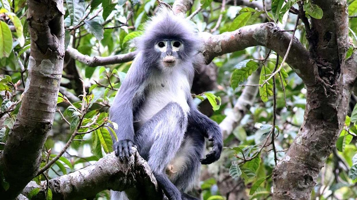 This New Monkey Species Is Already Critically Endangered