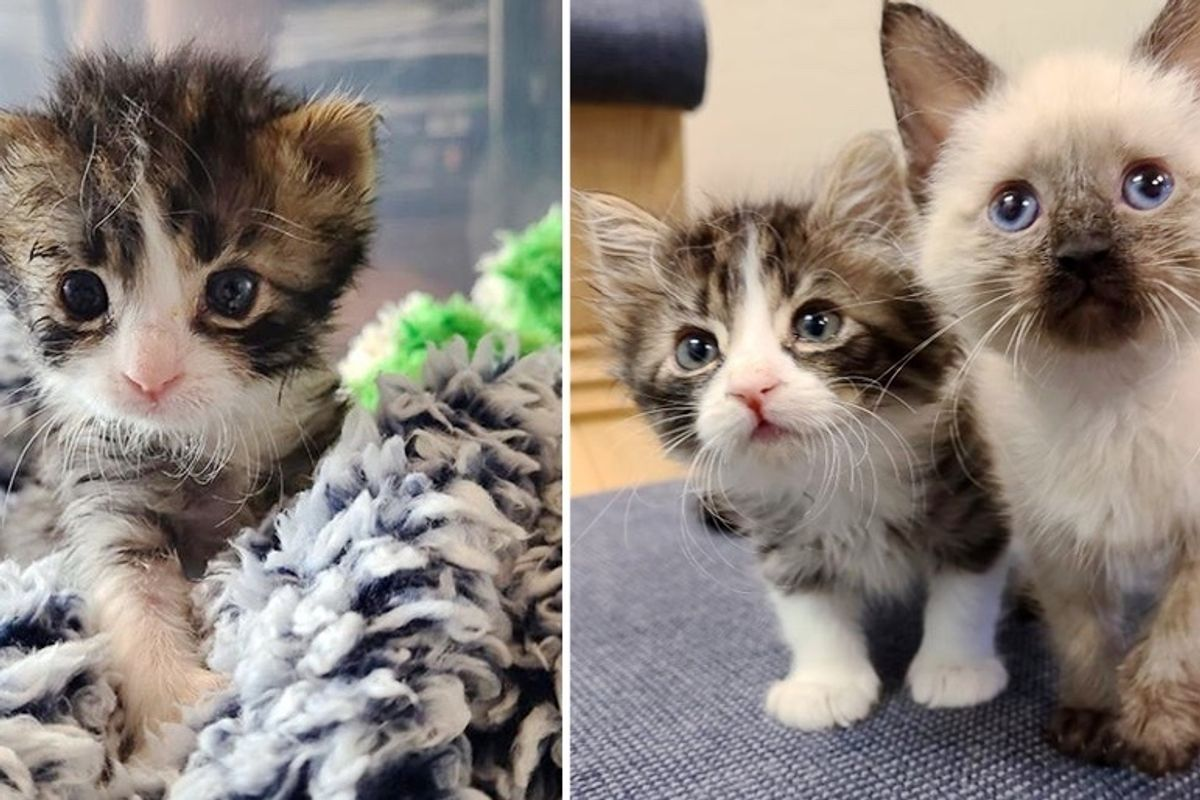 Kitten with 3 Paws Determined to Keep Up with His Siblings After Being Nursed Back to Health