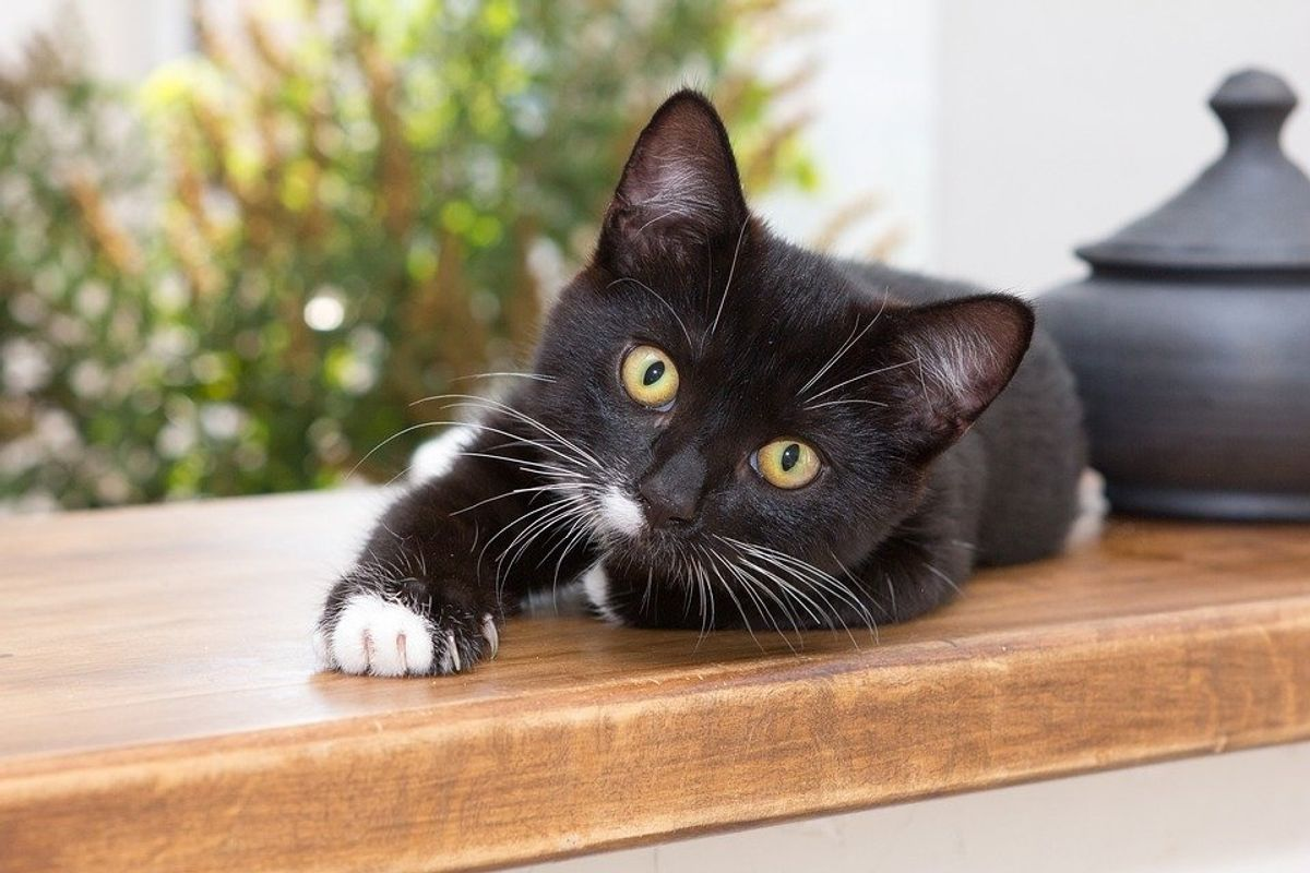 A new app can help you translate your cats meows