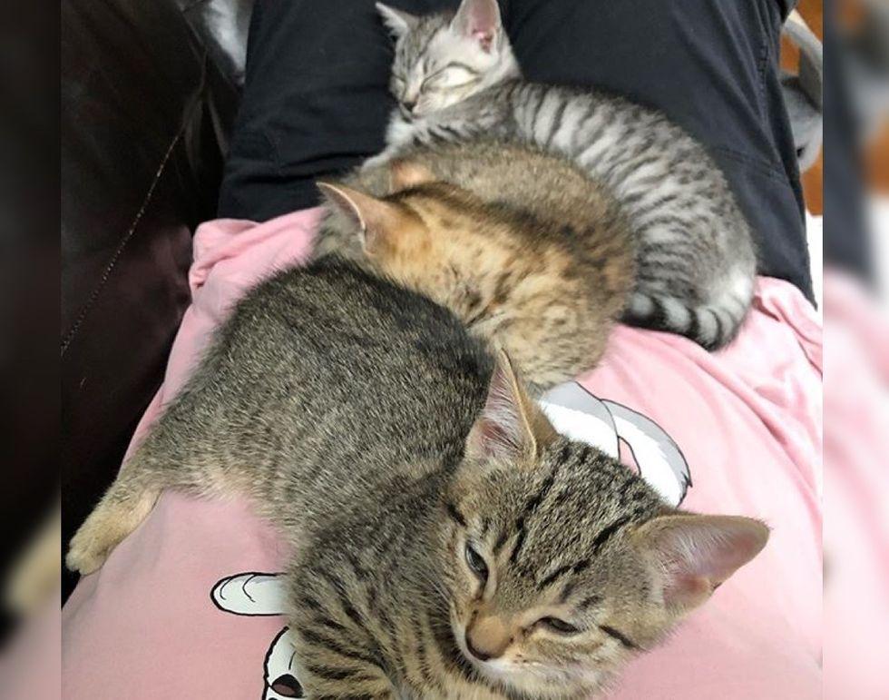 3 gatitos adoptivos hacen realidad el sueño del último cumpleaños de una mujer