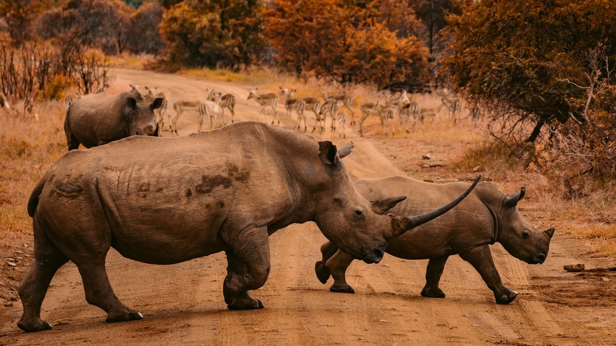 9 of the most shocking facts about global extinction - and how to stop it