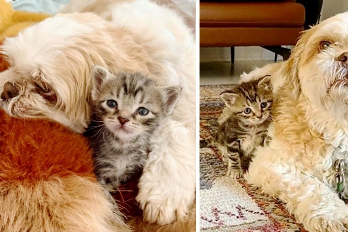 Kitten Bounced Back, Finds Sweetest Friend to Guard Her Everywhere She Goes