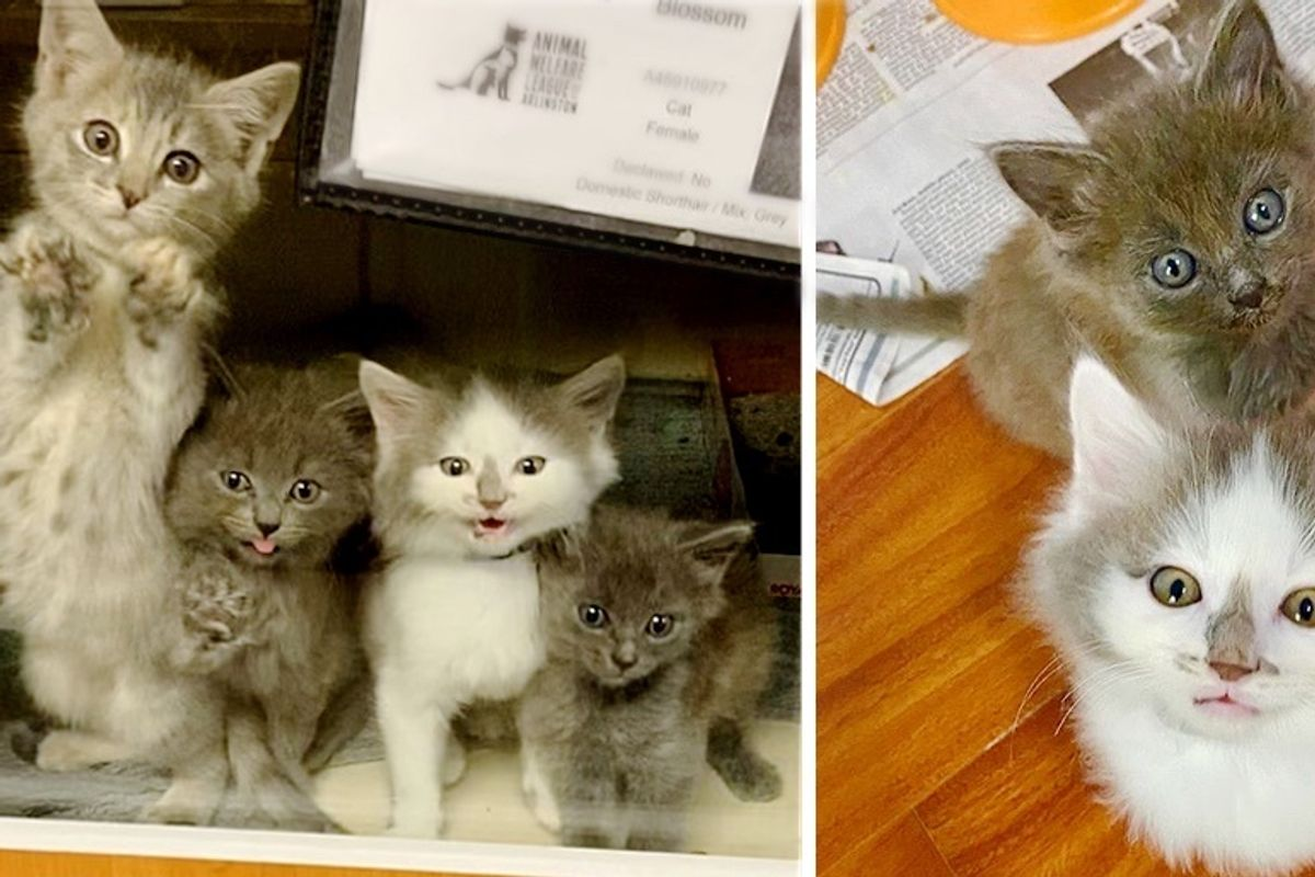 5 Kittens Found Outside Together, So Happy to Get the Help They Needed to Thrive