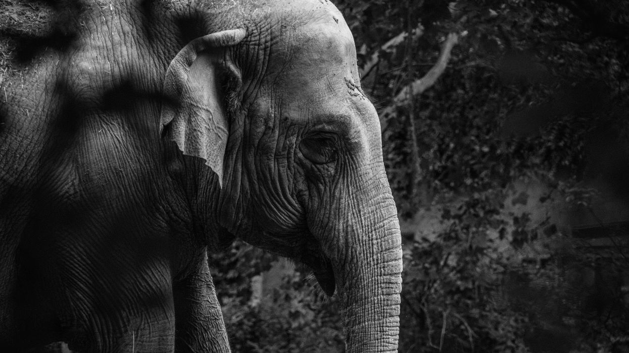 Are animals 'persons'? New York court hears the case of Happy the elephant