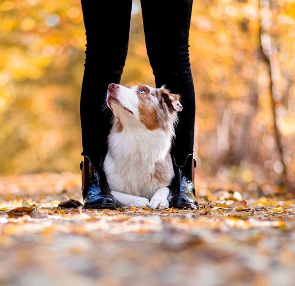 5 Reasons Getting A Pet Could Be The Best Thing You Do For Yourself