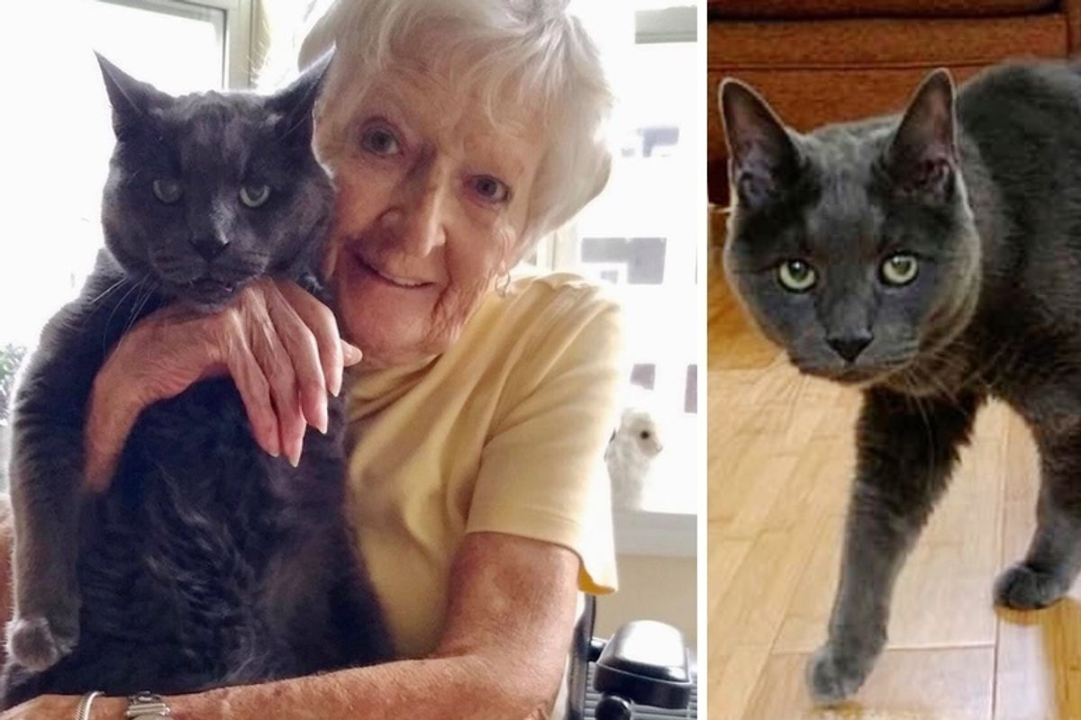 14 Year Old Shelter Cat Found Perfect Companion to Spend Golden Years with - They Both Needed Each Other
