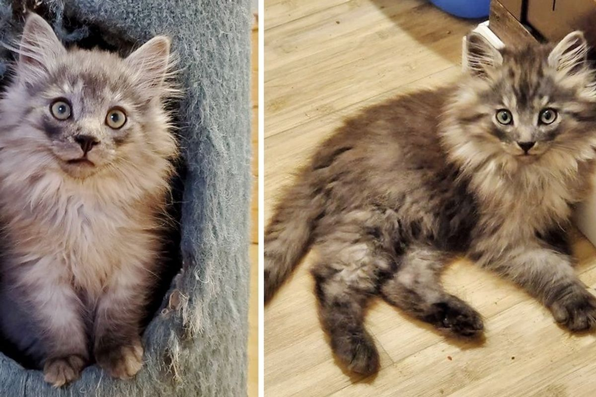 Fluffy Kitten Came Around and Discovered Joy Through Family After Life on Farm