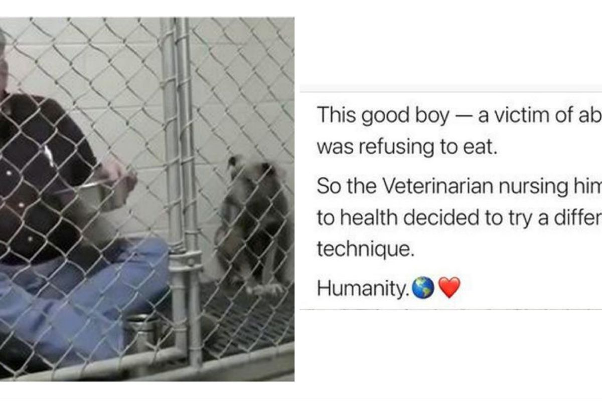 When a rescue dog refused to eat, this veterinarian nursed him back to health with pure love