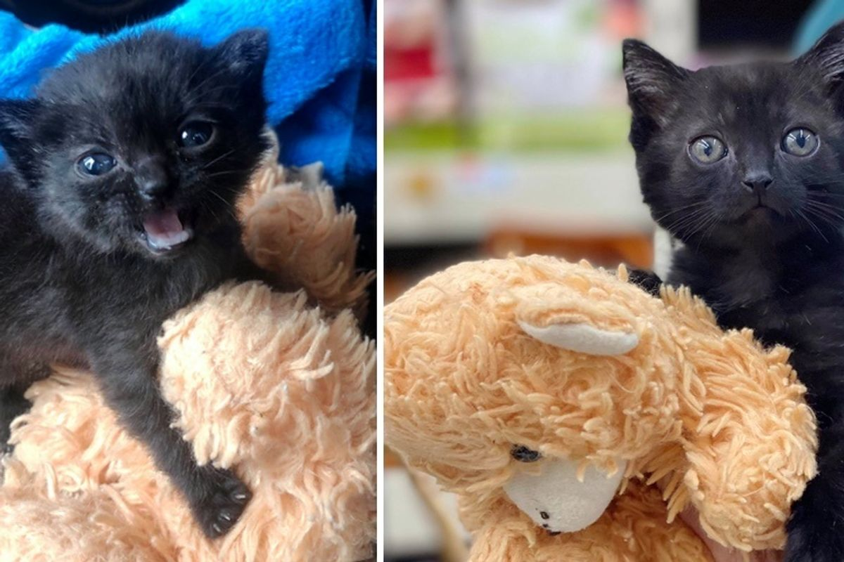 Kitten Won't Go Anywhere Without Her Teddy Bear After Being Found Alone Outside