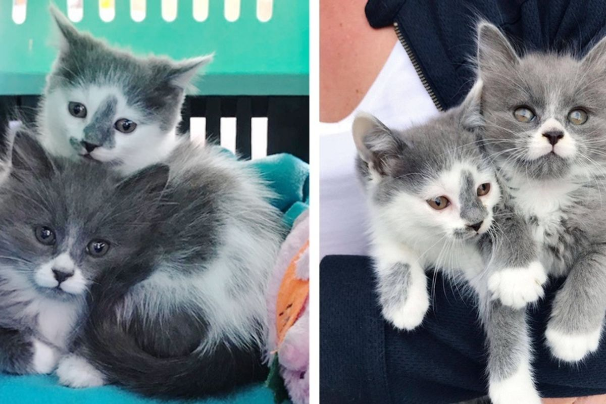Kittens Found Huddled in Garden, Share Sweetest Bond, Now Have Their Dream Come True