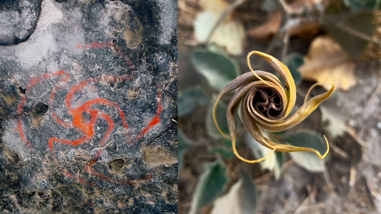 California cave art linked to early use of hallucinogens