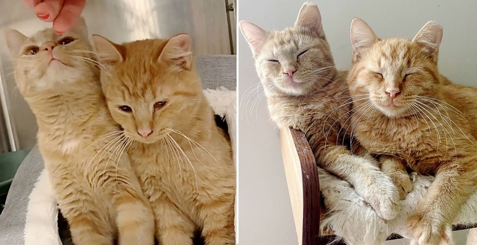 Kittens with Sweetest Smile Seek Attention from Everyone and Hope for Dream Home Together