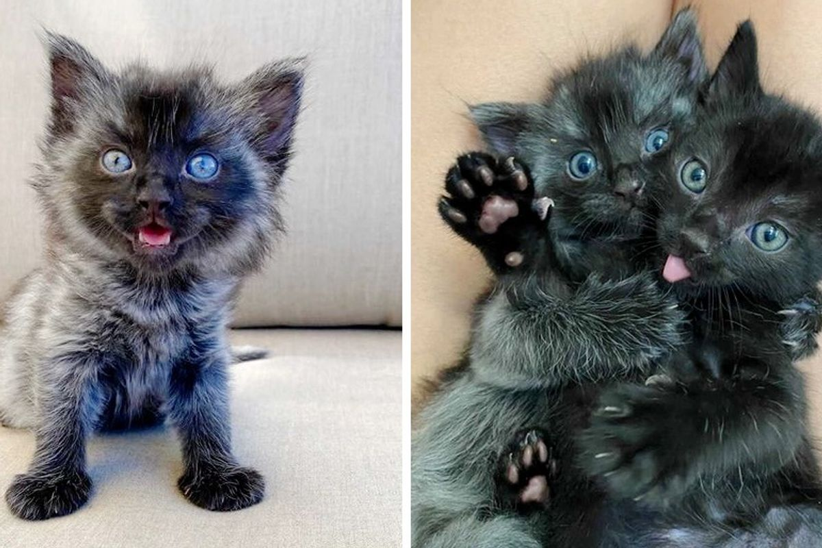 Kitten Found in Backyard with His Siblings, Grew Unique Coat, Determined to Thrive
